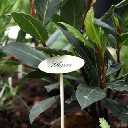 Etiquette jardin en métal Thym
