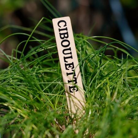 Etiquette de Jardin - Herbes Aromatiques et Provence