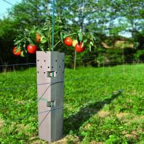 Mildiou Tomate - Protection contexte