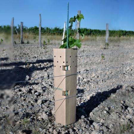 Fourreau de protection  vigne mildiou- 36mois
