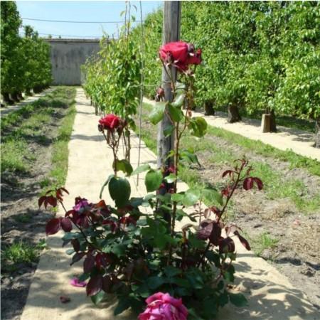 Paillage Jardin Jute Naturel Rouleau L:25m l:110cm 1400g/m² 2