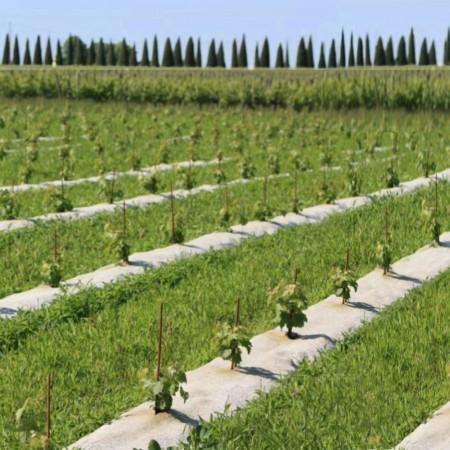 Paillage Jardin Jute Naturel Rouleau L:25m l:110cm 1000g/m²2