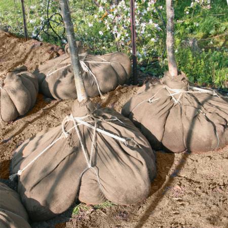 la tontine retient racine et terre, pour transporter, deplacer arbre et plante