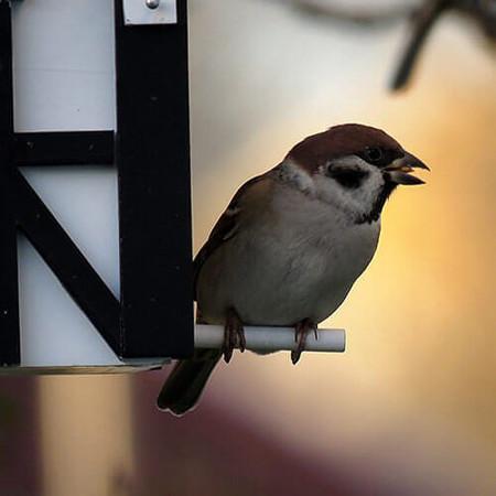 Mangeoire oiseaux et nichoir en contexte
