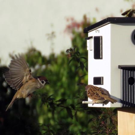 maison aux oiseaux avec nichoir