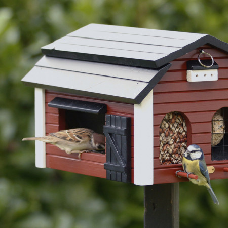 mangeoire oiseaux avec nichoir, en contexte